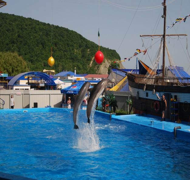 дельфинарий в с.Архипо-Осиповка