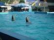 Театр морских животных «Архипо-Осиповский дельфинарий»